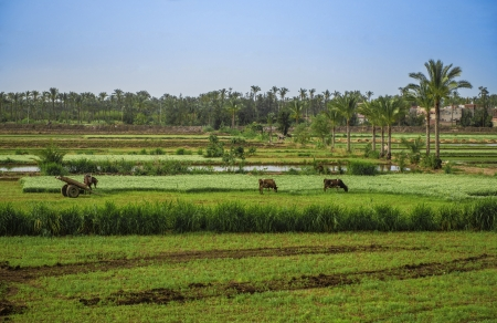 Egyptian Villages Green Countryside under Blue Sky photo