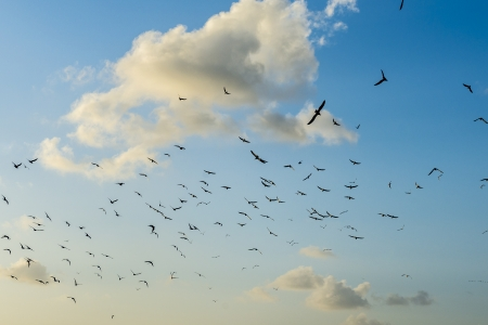 Folk of Birds in The Sky over White Clouds photo