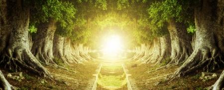 끝에서 빛과 어둠의 경로 내부 트리 터널 스톡 콘텐츠
