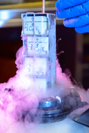 cold storage: A Laboratory Liquid Nitrogen Bank Containing Sperm and Eggs Samples Stock Photo