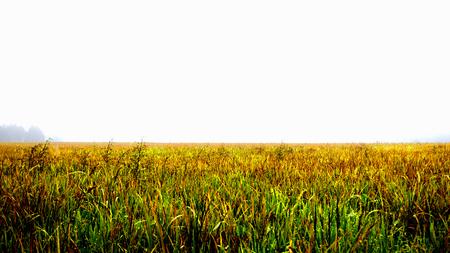 겨울 쌀 농장 스톡 콘텐츠 - 80820360