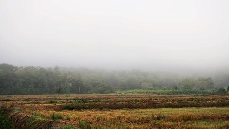 건조한 겨울 농장 스톡 콘텐츠 - 80820361