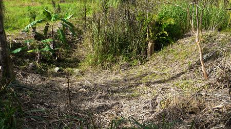deforested: Dead Hillside
