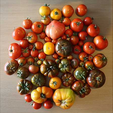 Heirloom Tomatoes photo