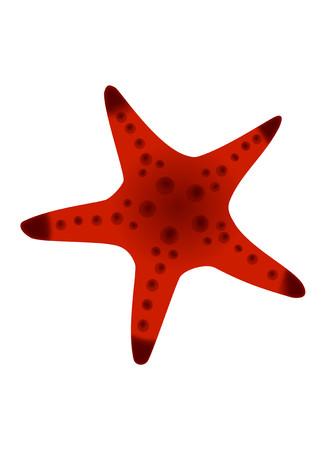 sea star: Red Sea Star