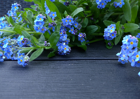 Forget-me-nots background