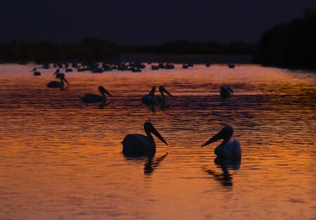 Pelicans Sunset