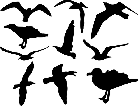seabird: Seagulls flying and sitting, collection of ten
