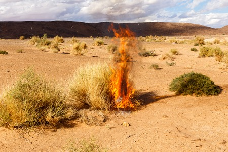 burning Bush grass in the Sahara desert, Morocco Stock Photo - 49138101
