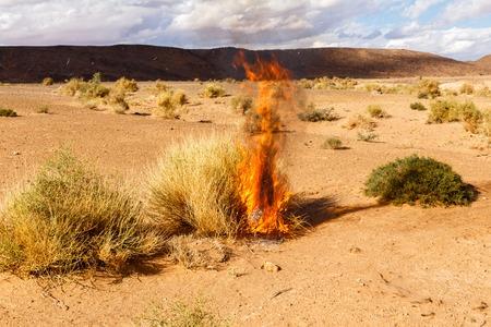 burning bush: burning Bush grass in the Sahara desert, Morocco