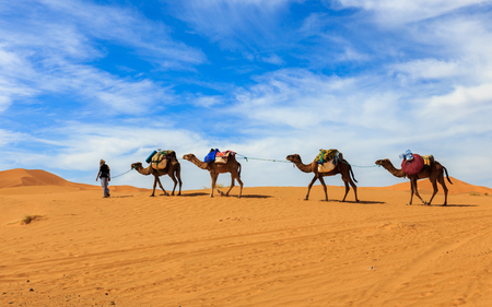 caravan van kamelen in de Sahara woestijn in Marokko Stockfoto