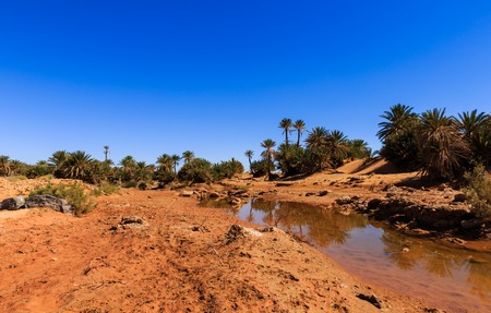 oasis: water in the oasis, Sahara desert, Morocco