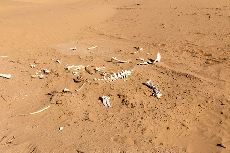 bones of an animal in the desert