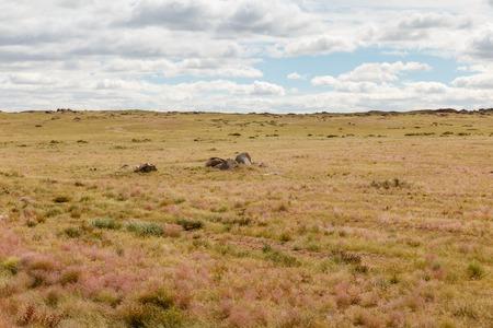 beautiful landscape of the gobi desert against a cloudy sky, mongolia