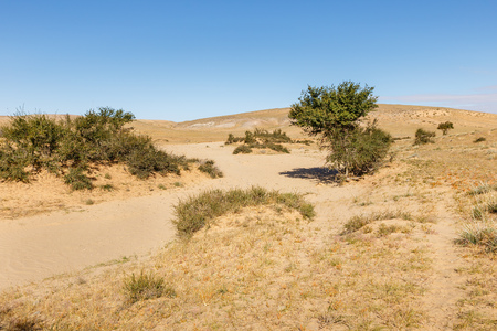 green trees in the desert, Gobi desert, Mongolia