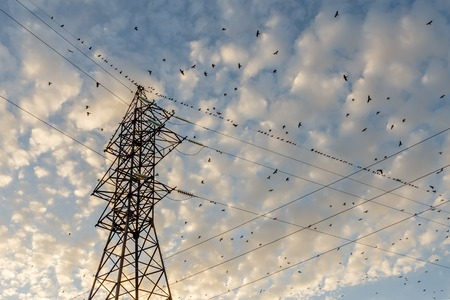 high voltage pylon with birds sitting on it, high voltage transmission line support Archivio Fotografico
