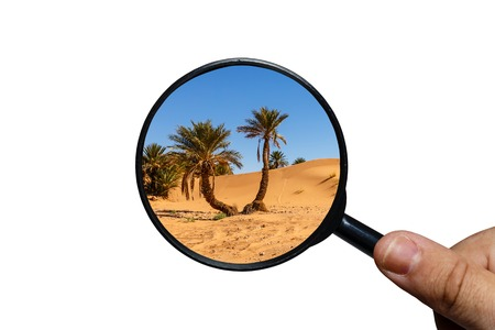 Palm tree in Sahara desert, view through a magnifying glass on a white background, magnifying glass in hand 版權商用圖片