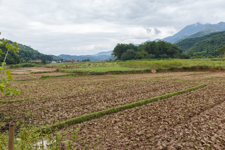 rice fields after harvest, preparing the fields for planting rice, beautiful landscape, Dien Bien province, Vietnam