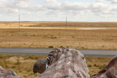 birds eye view of the steppe, eagle head, view of the back of the neck and head