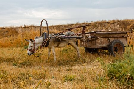 donkey harnessed to an iron cart stands in a meadow.