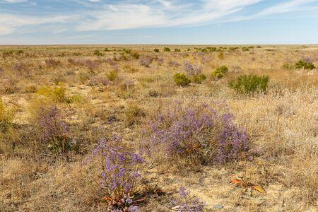 flowers in the steppe, beautiful landscape of Kazakhstan.