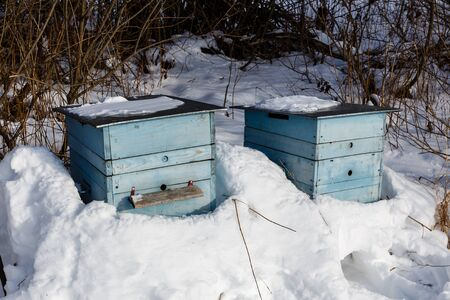 beehive in the winter forest, snow hive honey bees