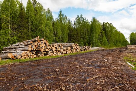 A large pile of logs lies near a road in the forest