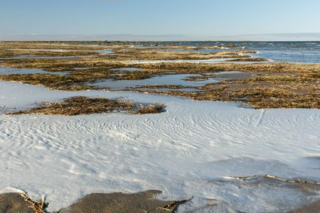 seaweed and foam on the shore of Lake Kamyslybas, large saltwater lake in the Kyzylorda Region of Kazakhstan. Stock fotó