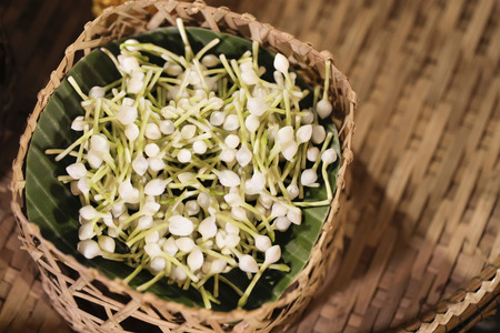 Jasmine in the basket, Arabian jasmine flowers for handmade garland.