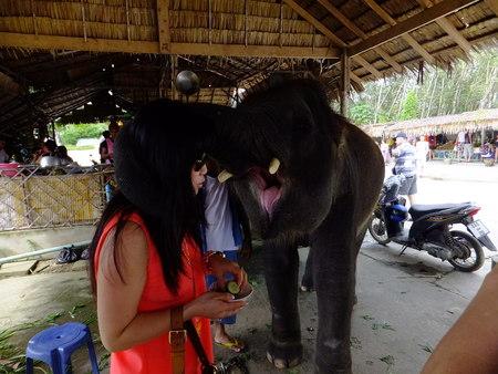 Elephant absorbeert bananen