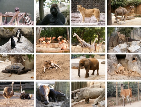 zoo animals: Collage of many different wild animals images