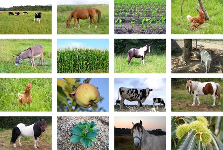 farm animals: Collage of farm animals and fields