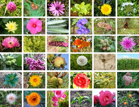 Beautiful nature collection with flowers and plants