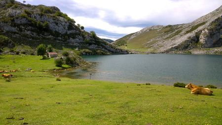 covadonga: Landscape of Lake Enol Lakes of Covadonga in Asturias, Spain