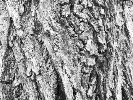rough: Rough bark tree surface