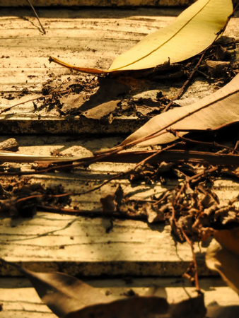 lonesome: Dry leaves on the wood with sunlight
