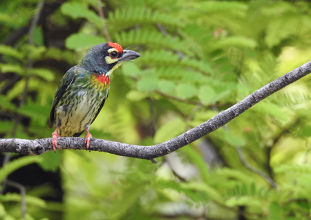 perching: Colorful bird is perching the branch Stock Photo