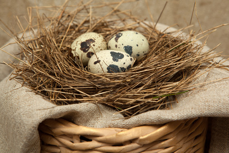 quail nest: Birds nest of straw with quail eggs on linen fabric.