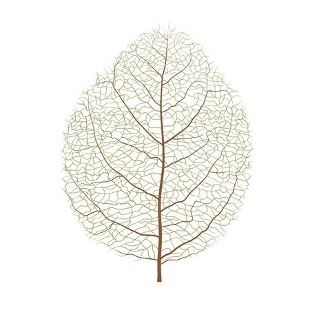 Vector wood leaf.