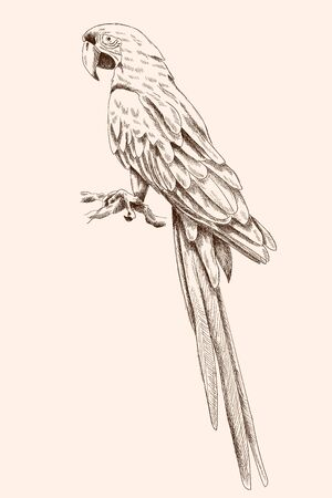 Big macaw parrot.