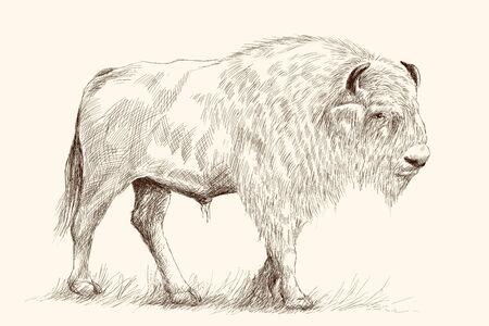 Un grande vecchio bisonte sta in piedi nell'erba. Schizzo del disegno della mano della matita su un fondo beige. Vettoriali
