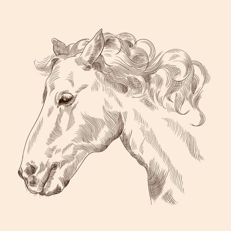Horse head drawing with mane in vintage style on a beige background. Close-up. 矢量图像