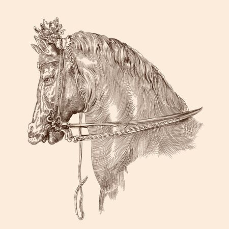 Horse head drawing with mane and harness in vintage style on a beige background. Close-up.