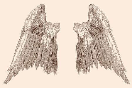 Two spread wings of an angel made of feathers isolated on a beige background. Ilustração