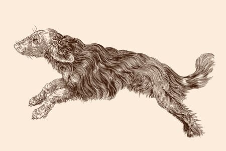 Shaggy dog with long hair in a jump. Vector illustration isolated on a beige background.
