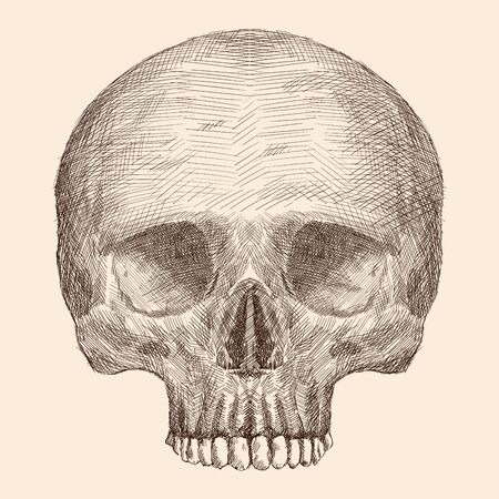 Pencil hand drawing of a human skull isolated on a beige background. Ilustração