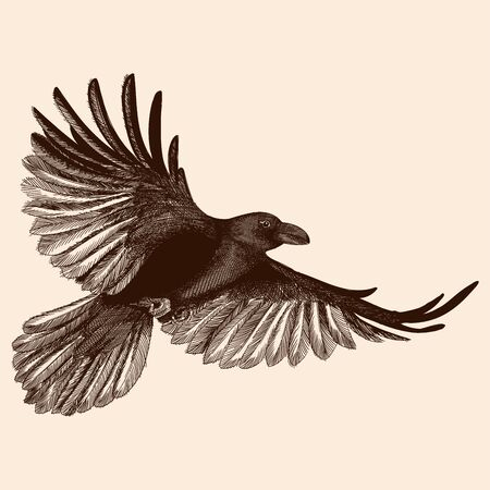 A black raven in flight with spread wings flies. Vector image stylized as engraving.