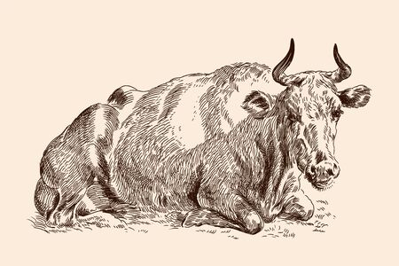 A cow lies on the grass in a pasture. Pencil sketch drawing isolated on a beige background.