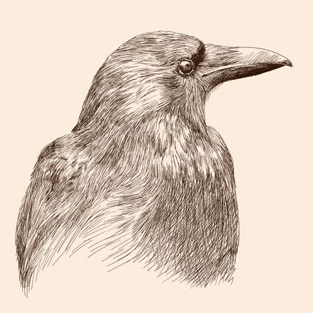 Hand drawing black raven. Sketch on a beige background.