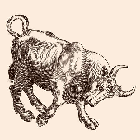 A furious bull stands in a pose with its horns thrust forward. Vector image of a medieval engraving on a beige background. Ilustração